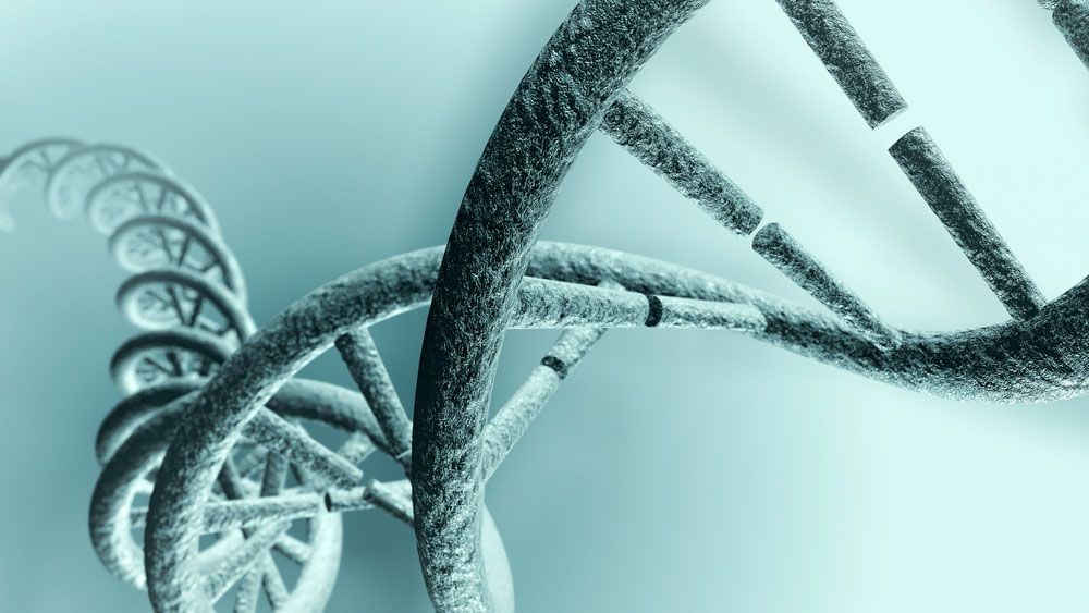 El estudio del cariotipo permitrá que los progenitores puedan tener la certeza de que no transmitirán ninguna enfermedad hereditaria a sus hijos